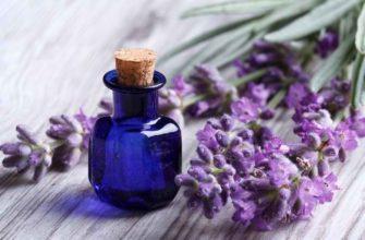 Эфирное масло лаванды - полезные свойства и применение