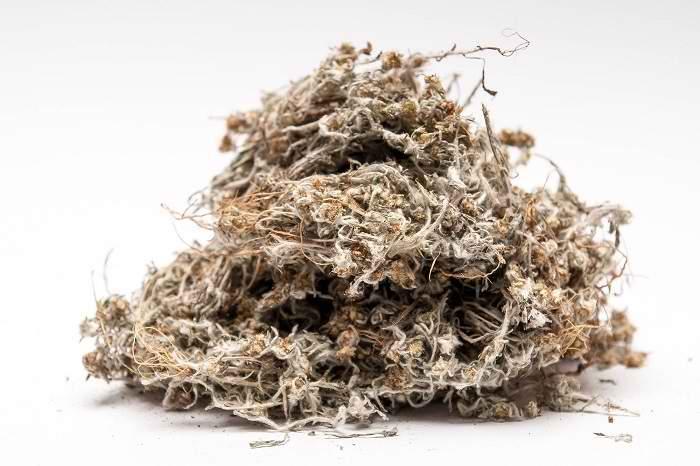 Сухое сырье сушеницы